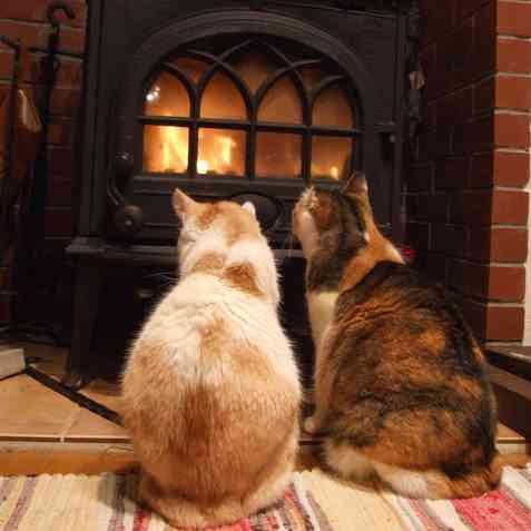 2匹の猫と暖炉