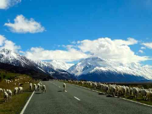 羊が歩く道