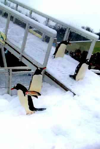 ペンギンの滑り台