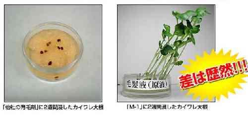 育毛促進剤のカイワレの発芽の実験