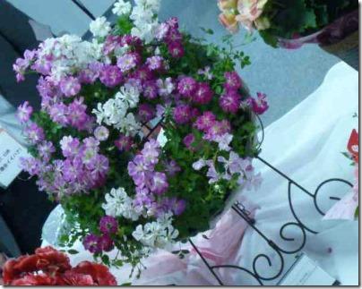 母の日にバラの鉢植え | 愛らしいミニバラのリースが玄関で出迎え