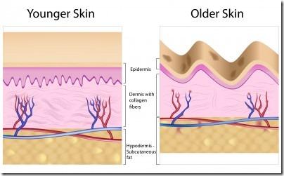 若肌と年齢肌の比較