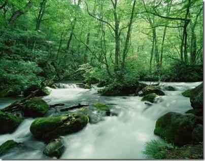 山の中の湧き水