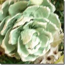グリーンのプリザーブドローズ