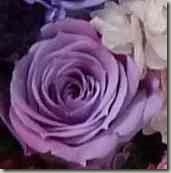 グラディーション紫のバラアレンジメント