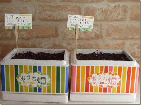 きゅうり栽培セット