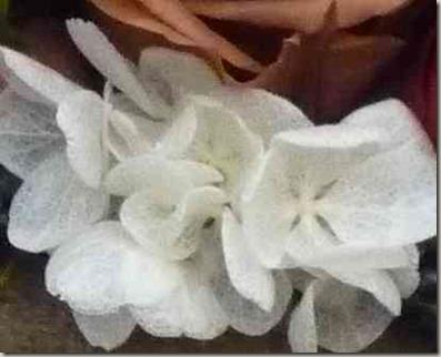 ショコラケーキの白い紫陽花のガク