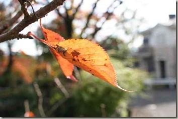 枝につけた枯れ葉