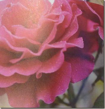 さ姫の薔薇