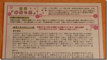 盆栽『春待ち桜』のお手入れ方法説明書