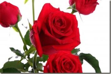 バレンタインには花束やアレンジメントで、特別感を盛り上げる