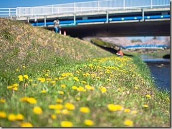 春の川の土手