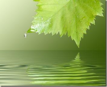 しその葉と水