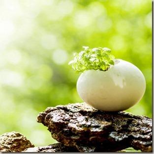 卵の中の芽
