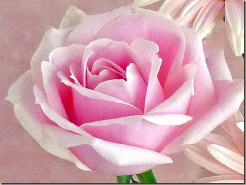 花束ペタロローザ