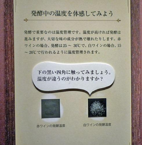 発酵温度体感