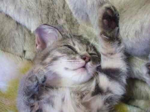 爆睡の子猫