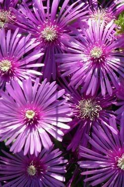 コンデジで撮った花