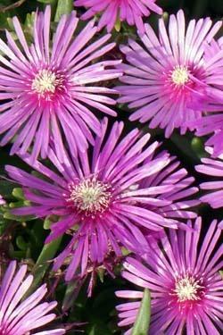 ミラーレスで撮った花