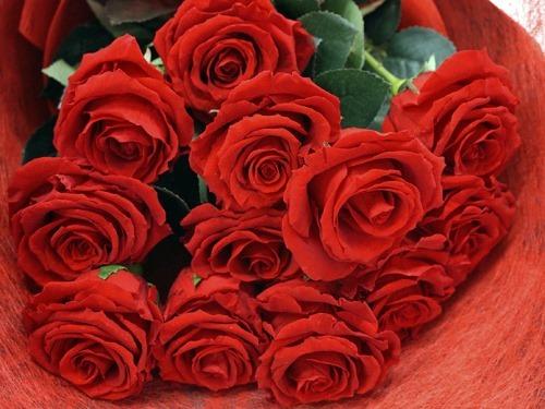 赤いバラの花束12本