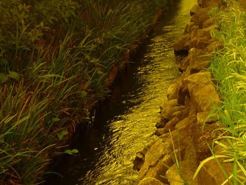 偏光レンズで撮った小川の水辺