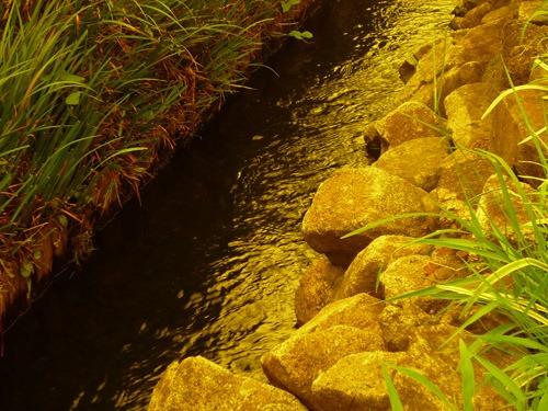 UVレンズで撮った小川の水辺