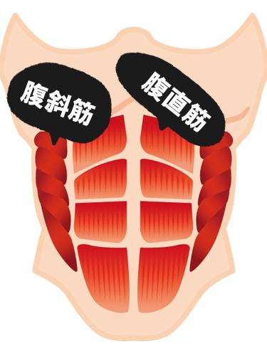 腹筋の主要な筋肉