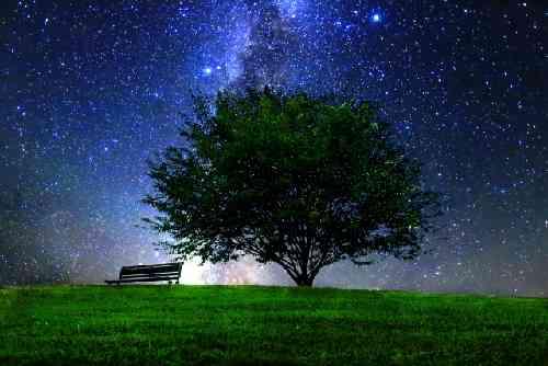 夜空の星と大きな木とベンチ