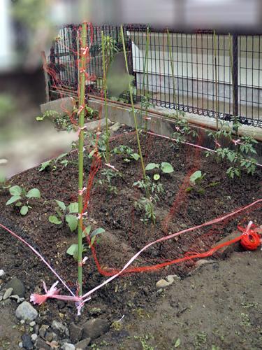 ナスとプチトマト畑の完成