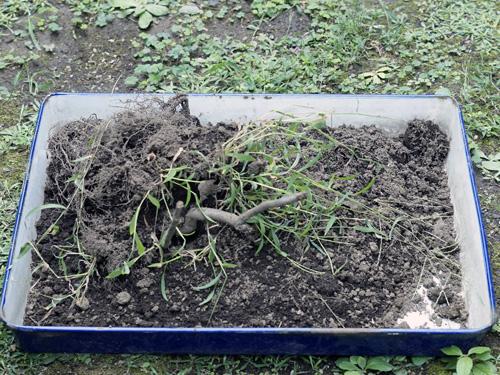 再生土を入れる前の容器