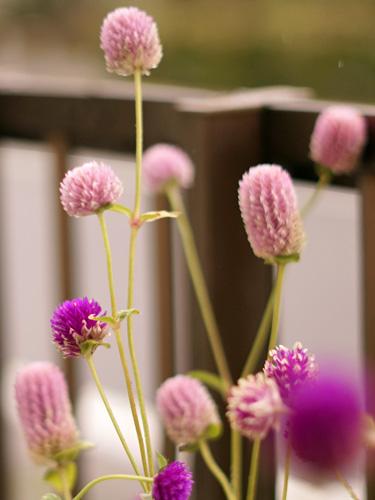 ネオンホワイトの花