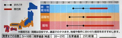 千日紅の開花期間の表