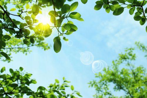 新緑の隙間からの強い日差し