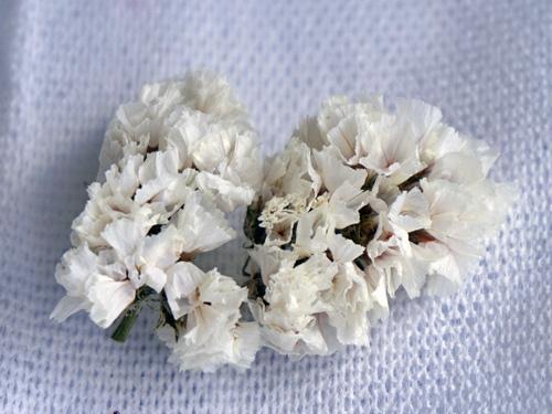 ふんわり感のある白い花