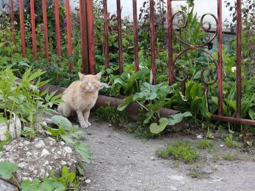 垣根沿いを歩く猫